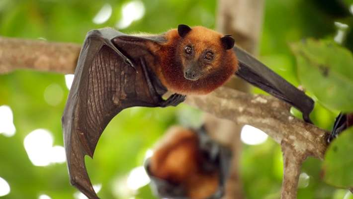 nipah-virus-precautions-for-farmers