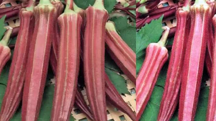 red-okra