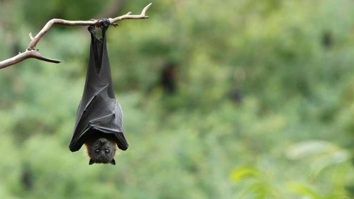 nipah-resistant-mission-starts-soon