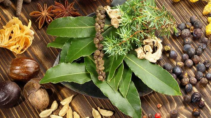 ayurvedic-treatment-with-plants