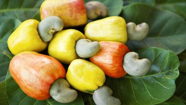 Cashew Business, Banking Services